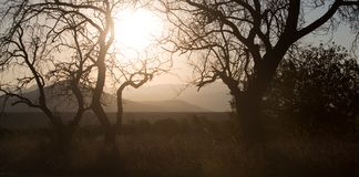 Krokiga träd mot bergig bakgrund Royaltyfria Bilder