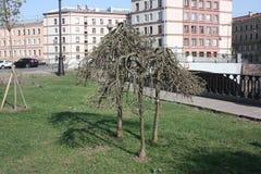 krokiga träd på stranden royaltyfri fotografi