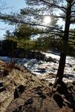 Krokigt träd vid floden fotografering för bildbyråer