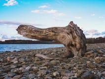 Krokigt träsnitt på kanten av en sjö arkivfoton