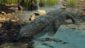 krokodil stock foto's
