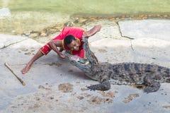 Krokodil royaltyfria foton