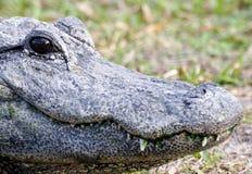 Krokodil 6 Lizenzfreie Stockfotos