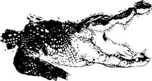 Krokodil Royalty-vrije Stock Fotografie