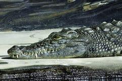 Krokodil Royaltyfri Foto