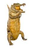 Krokodil angefüllt Lizenzfreie Stockfotos