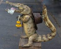 Krokodil angefüllt Lizenzfreies Stockfoto