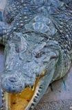 Krokodil auf einem Bauernhof, Thailand Stockbilder