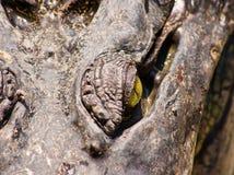 Krokodil auf einem Bauernhof, Thailand Lizenzfreies Stockbild