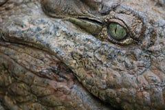 Krokodil-Auge Lizenzfreie Stockbilder