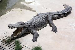 Krokodil-Bauernhof Lizenzfreie Stockfotos