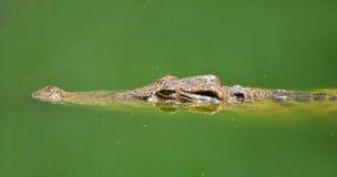 Krokodil-Bauernhof ist in Pattaya, Thailand Lizenzfreie Stockfotos