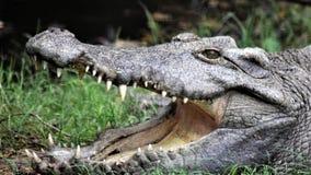 Krokodil in de dierentuin van Delhi stock afbeelding