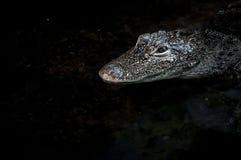 Krokodil dichte omhooggaand stock afbeeldingen