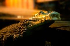 Krokodil die op de waterspiegel drijven royalty-vrije stock afbeeldingen