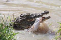 Krokodil die Vissen vangt royalty-vrije stock foto