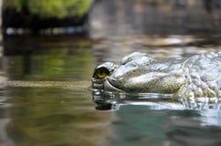 Krokodil die in waterfoto sluimeren Royalty-vrije Stock Foto's