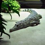 Krokodil in dierentuin stock foto