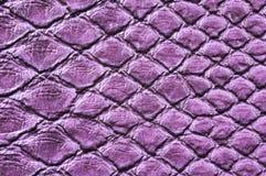 Krokodil-Haut Stockbild