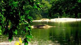 Krokodil in het midden van overzees royalty-vrije stock afbeelding