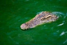 Krokodil in het moeras royalty-vrije stock foto's