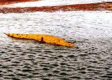Krokodil in het water Royalty-vrije Stock Foto's