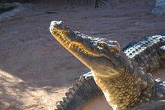 Krokodil hoofdclose-up bij dierentuin, mond en tanden royalty-vrije stock afbeelding