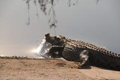 Krokodil i nordliga Namibia arkivfoto