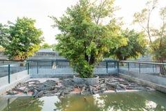 Krokodil im Bauernhof Stockbild