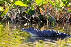 Krokodil im Feuchtgebiet Lizenzfreie Stockfotos