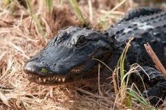 Krokodil im Gras stockfotografie