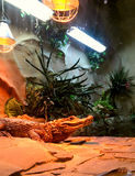 Krokodil im Terrarium Lizenzfreie Stockfotos