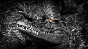 Krokodil med att glöda för ögon