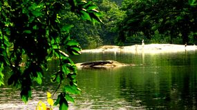 Krokodil mitten in Meer Lizenzfreies Stockbild
