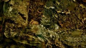 Krokodil oder Alligator? Lizenzfreies Stockbild