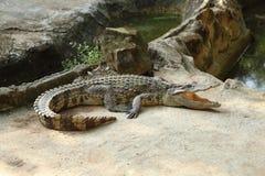 Krokodil op een landbouwbedrijf royalty-vrije stock fotografie