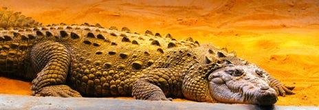 Krokodil på sand fotografering för bildbyråer