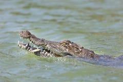 Krokodil på sjön Baringo, Kenya Fotografering för Bildbyråer