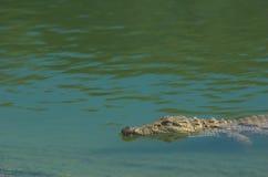 Krokodil in rivier Royalty-vrije Stock Fotografie
