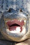 krokodil som smilleing Arkivbild