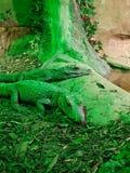 Krokodil twee die in een bijlage bij een dierentuin zonnebaden stock afbeeldingen