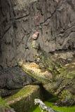 Krokodil voeden, krokodil die een vis eten royalty-vrije stock afbeelding