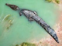 Krokodil in water stock afbeeldingen