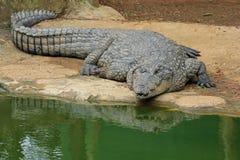 Krokodil, Zuid-Afrika royalty-vrije stock foto's