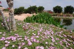 Krokodilbauernhof in Agadir Stockfotos