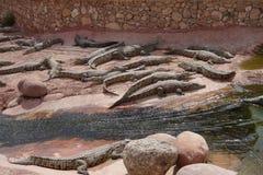 Krokodilbauernhof in Marokko Lizenzfreies Stockbild