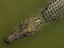 Krokodile auf einem Fluss Lizenzfreie Stockfotografie