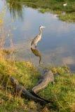 Krokodile und Vögel Stockfotos