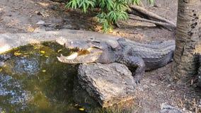 Krokodilen öppnar munnen royaltyfri foto
