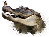 Krokodilen och monarkfjärilen för Adobekorrigeringar hög för målning för photoshop för kvalitet för bildläsning vattenfärg mycket royaltyfria bilder